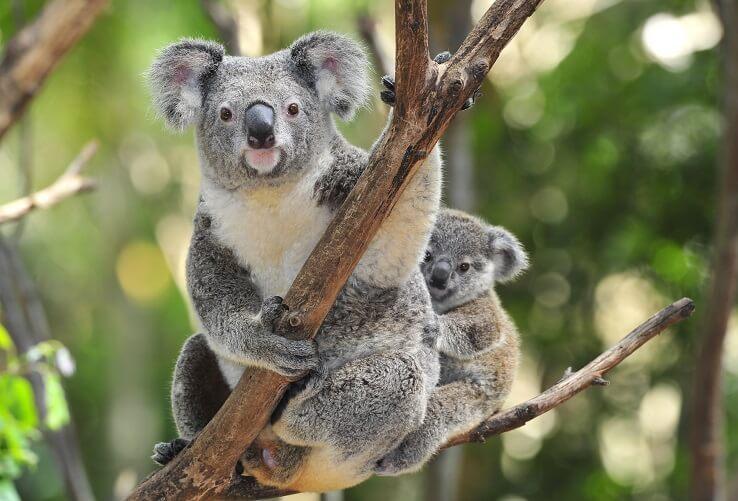 オーストラリア観光